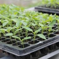 """Посевной календарь на 2019 год: как сажаем в марте и апреле, какие растения и овощи, подкормка, советы для огородников"""""""