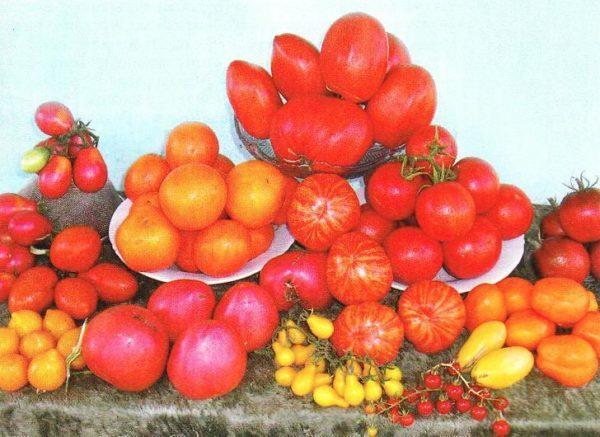 Несколько сортов помидор, какой выбрать - решать вам