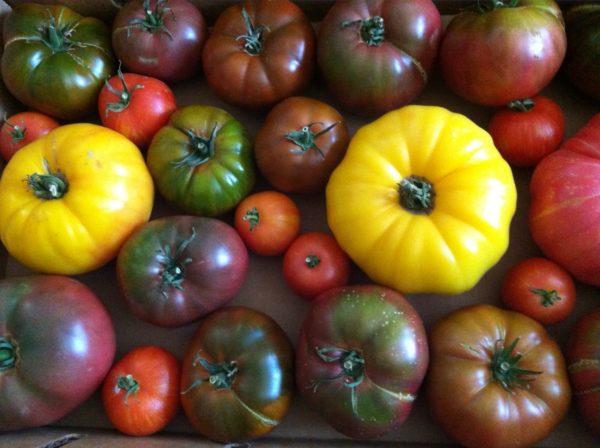 Разнообразие множества видов помидор