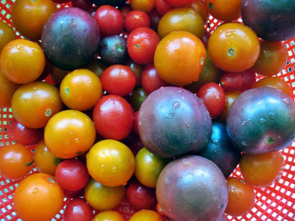 На картинке можно увидеть как сильно темные томаты отличаются от привычных для нас