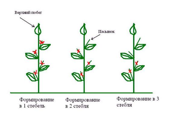 Возможные схемы пасынкования томатов