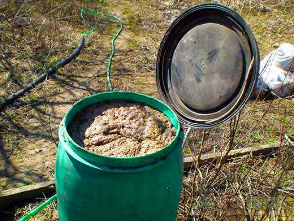 Приготовление универсального биоудобрения для огурцов