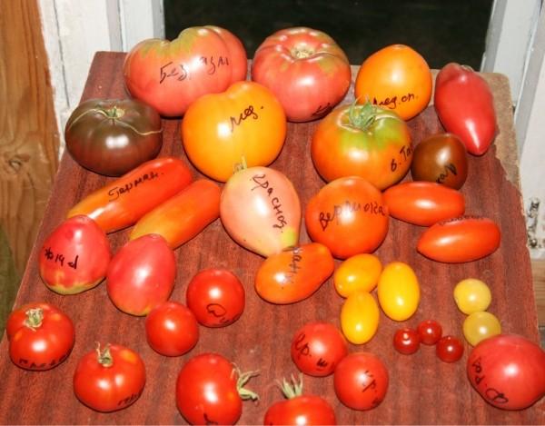Разные по форме и цвету томаты
