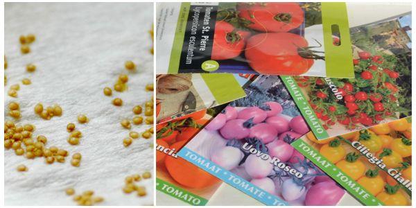 Семена можно приготовить к посадке дома самостоятельно