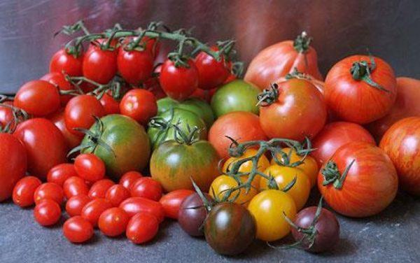 Как видно на картинке, существуют даже черные сорта томата