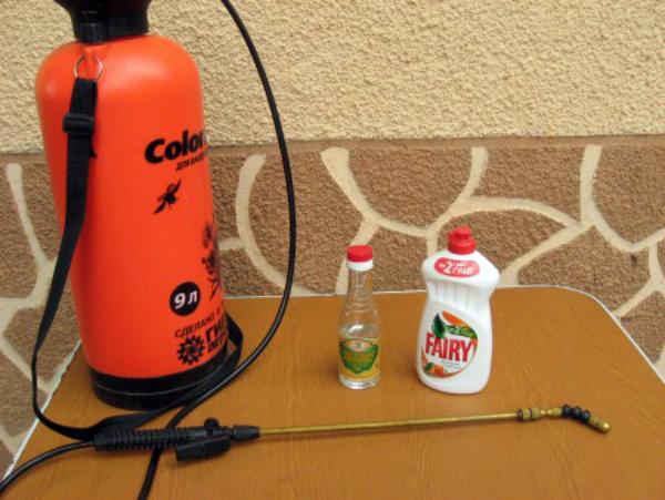 Приготовления раствора против тли для опрыскивания огурцов