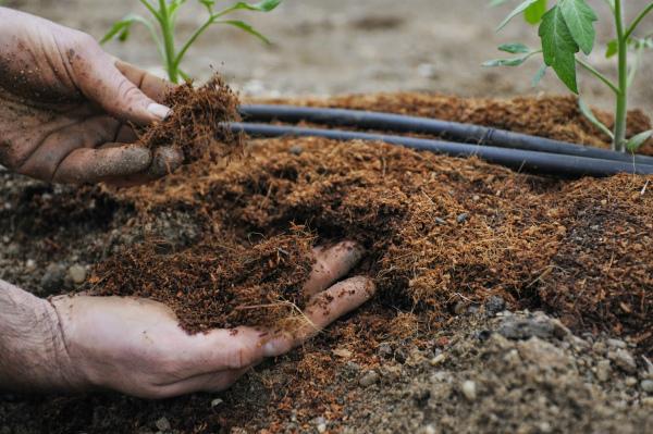 Органическое удобрение для перцев — перегной