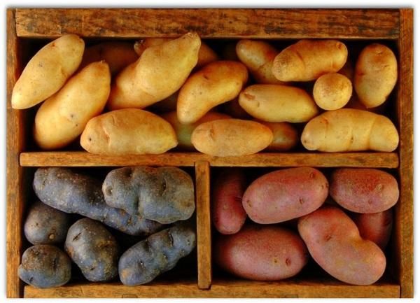 Картофель собран в ящик