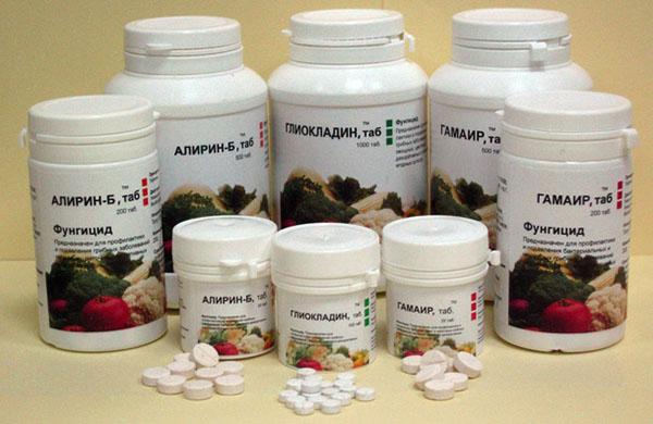 Биологические препараты для борьбы с фитофторозом