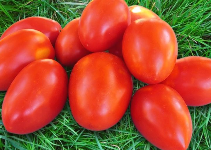Фото помидоров сорта акварель