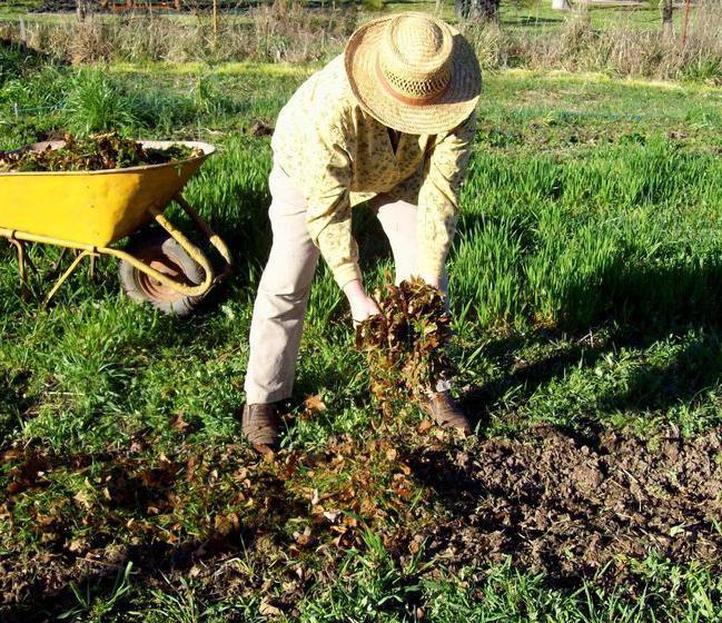 Процедура удобрения почвы осенью