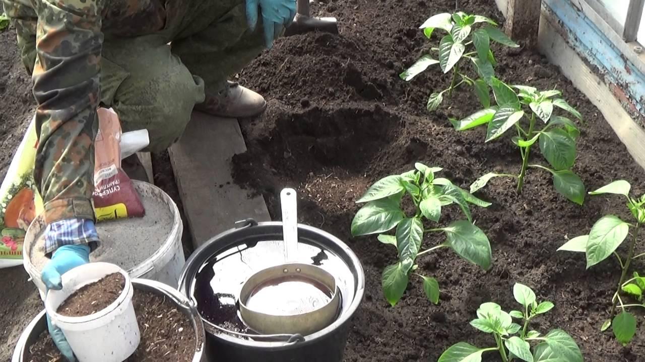 Процесс посадки перца в теплице