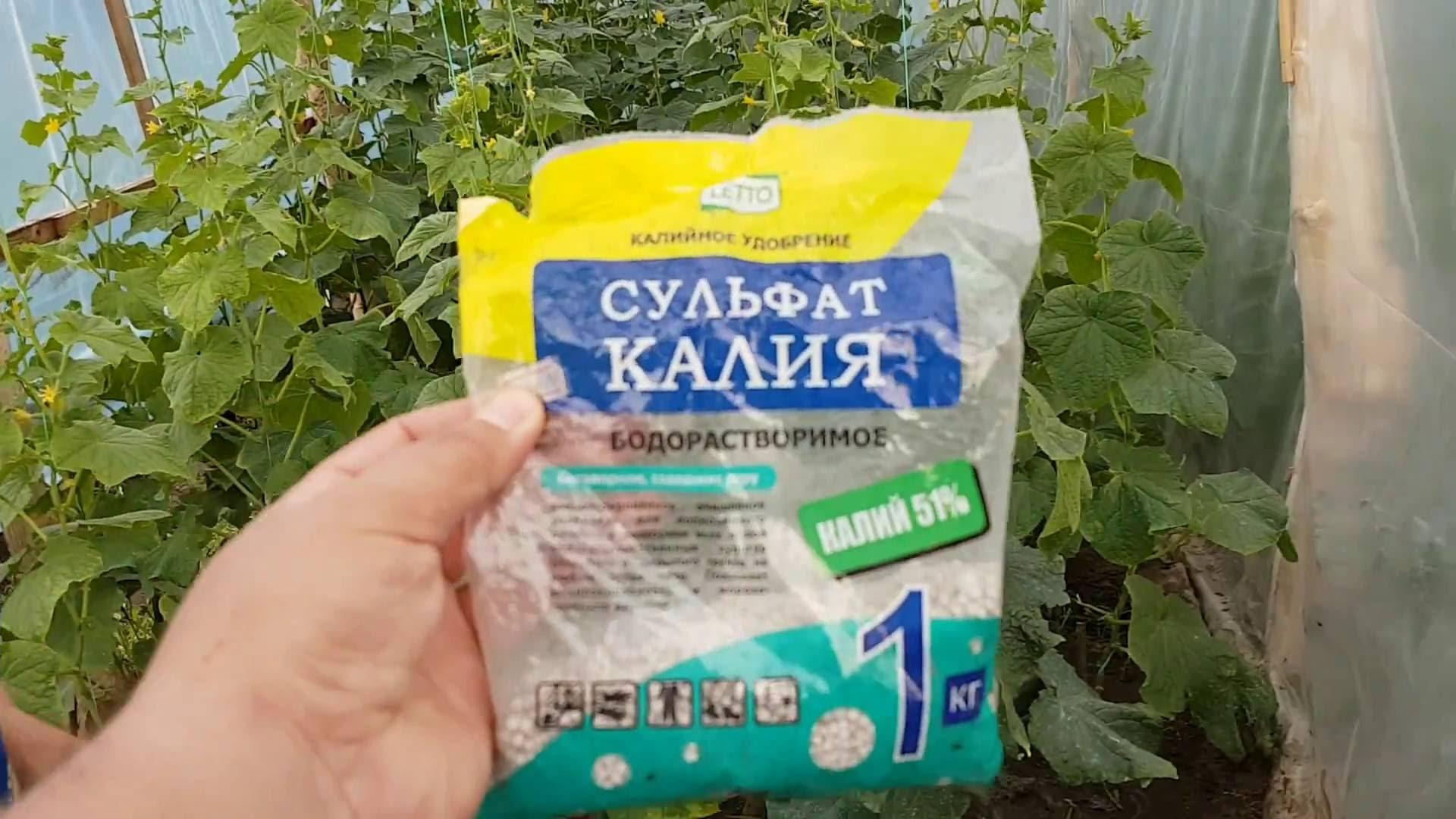 Удобрение огурцов сульфатом калия