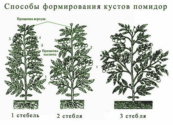 Три способа формировать томатные куста