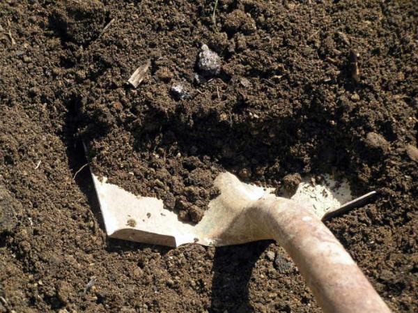 Замена грунта для выращивания огурцов