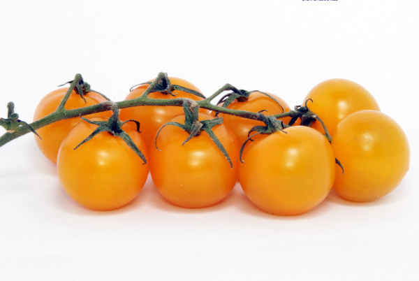 Веточка желтых помидоров черри