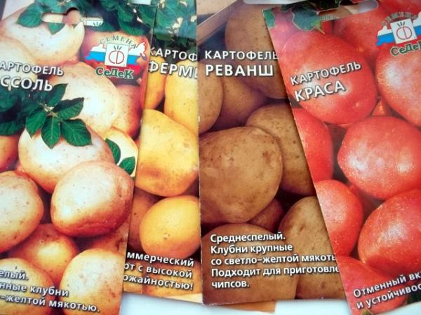 Семена различных сортов селекционного картофеля
