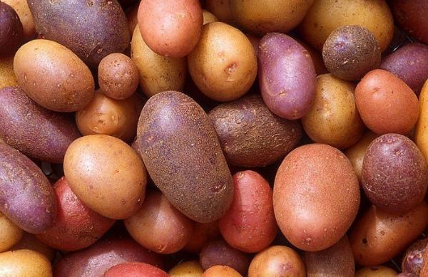 Самые популярные виды домашнего картофеля