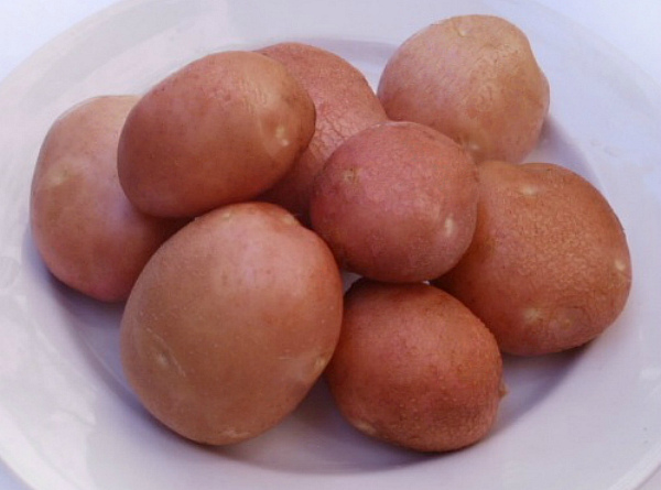 Отборные клубни картофеля Беллароза