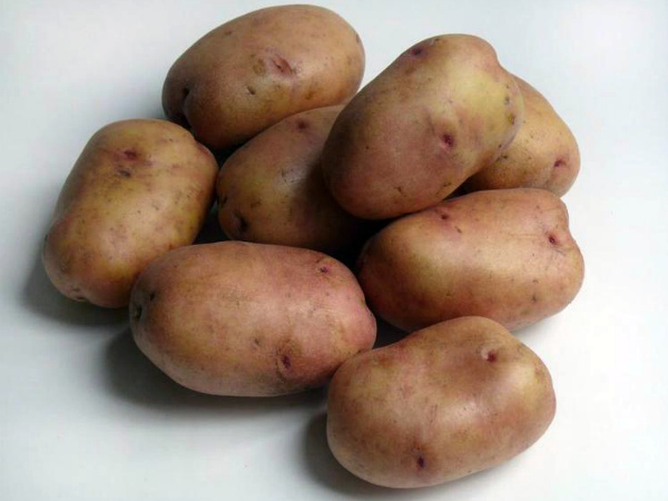 Сорт раннего картофеля Жуковский
