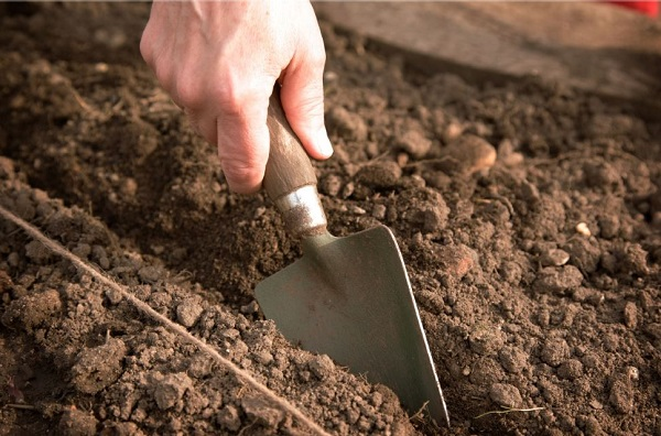 Плодородная почва для высадки кустов