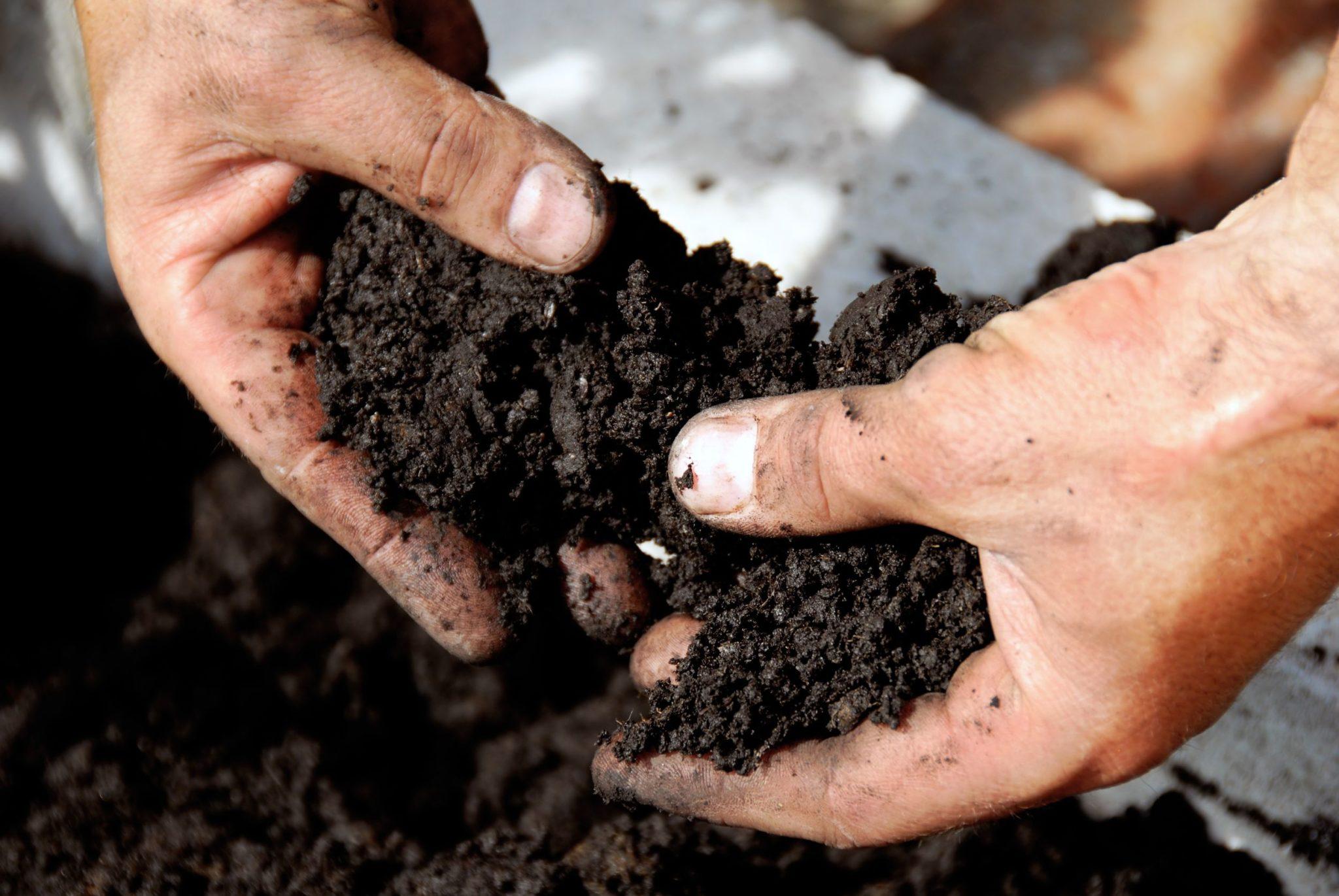 Подготовка почвы для выращивания томатов на балконе