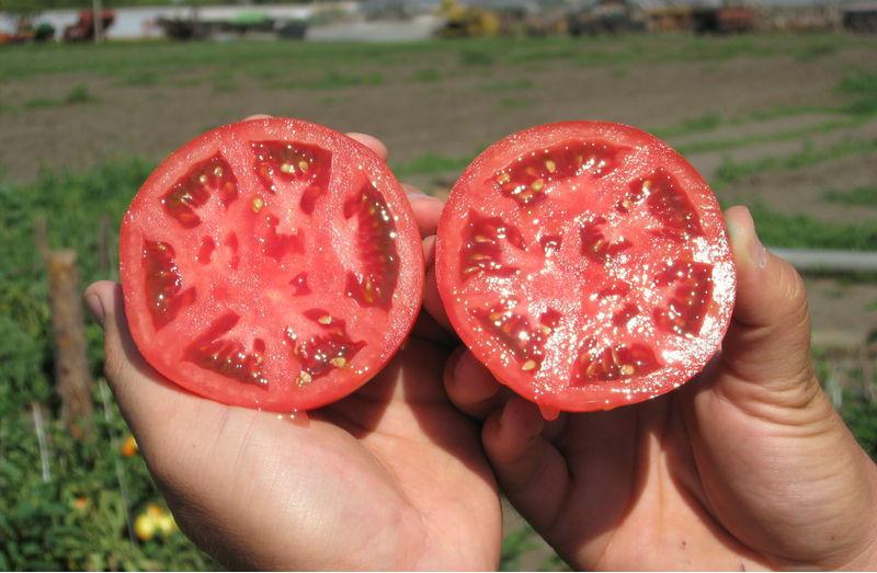 Разрезанный томат с семенами