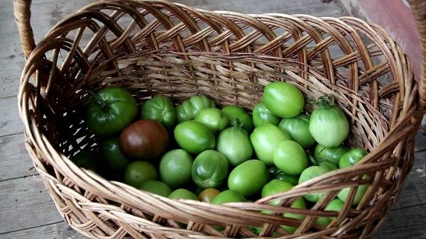 Зеленые помидоры в корзине