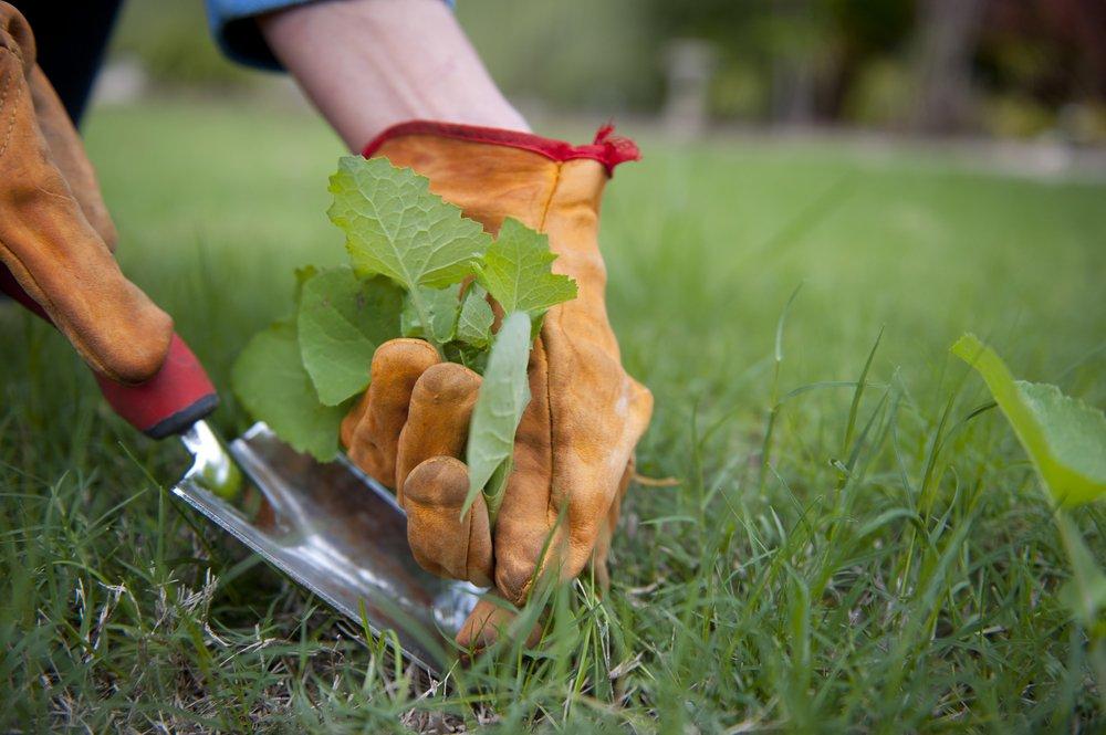 Уничтожение сорняков на грядке