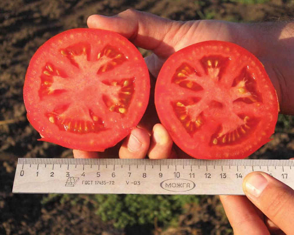 Разрезанный томат пьетро F1