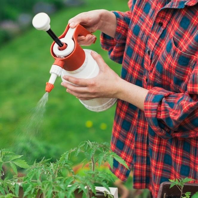 Опрыскивание томатов на грядке
