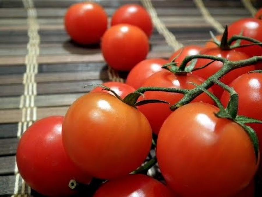Урожай томатов на столе