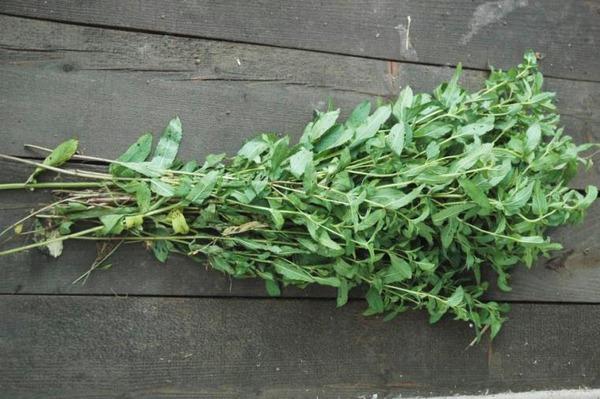 Урожай мяты на доске