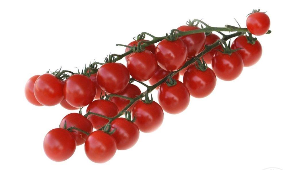 Ветка помидоров черри