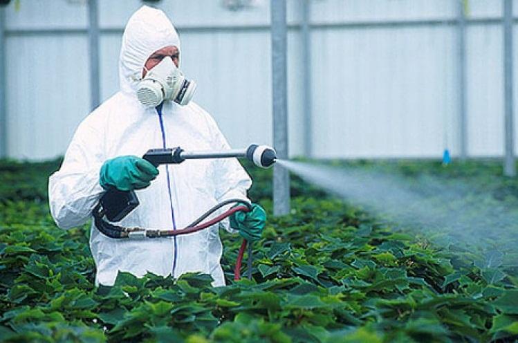 Химическое опрыскивание огурцов
