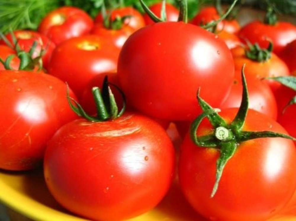 Урожай томатов слот f1