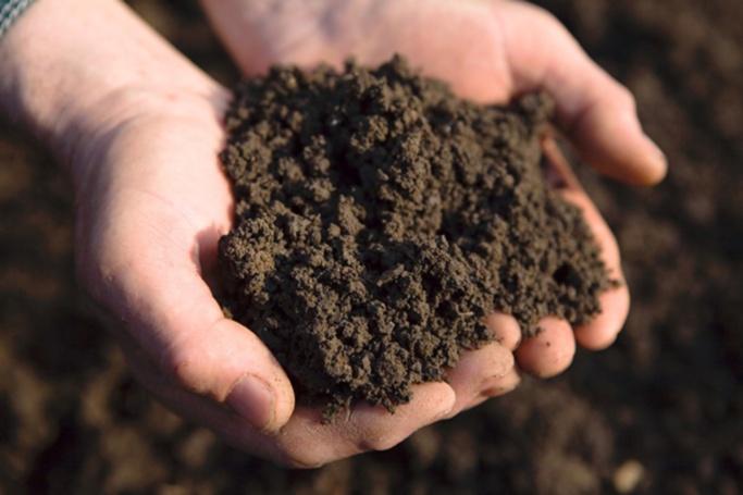 Перекопанная и влажная почва для посадки кустов