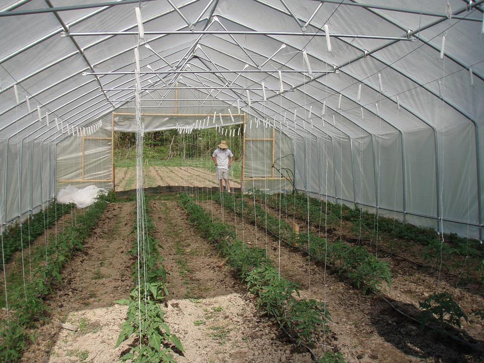 Подвязка помидор метод шпалера