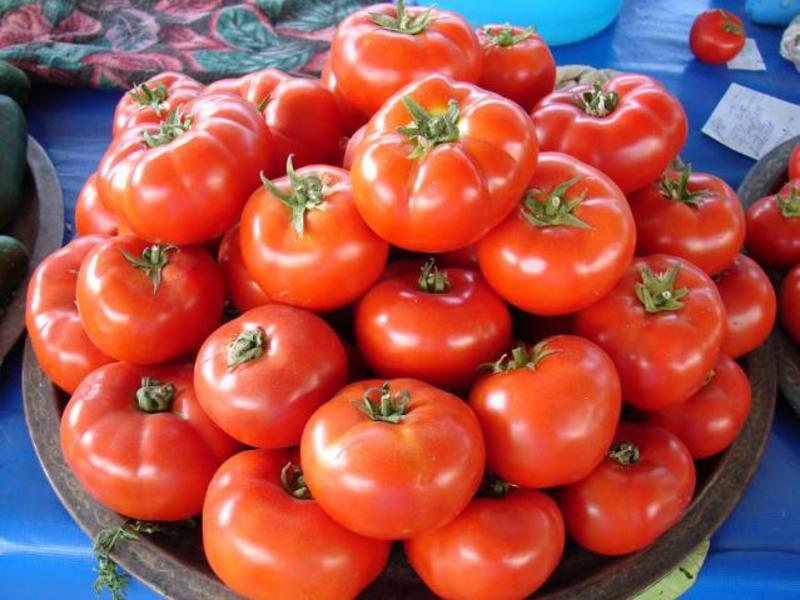 Урожай помидоров на подносе