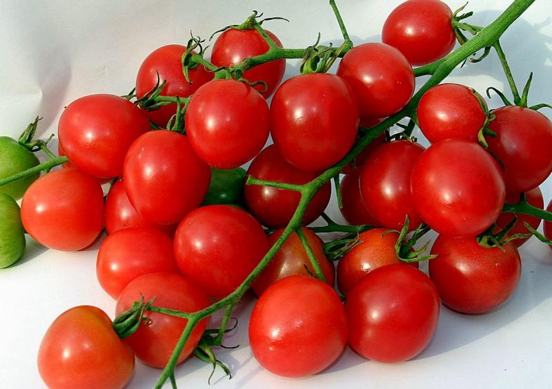 Сорт сибирских томатов Алсу