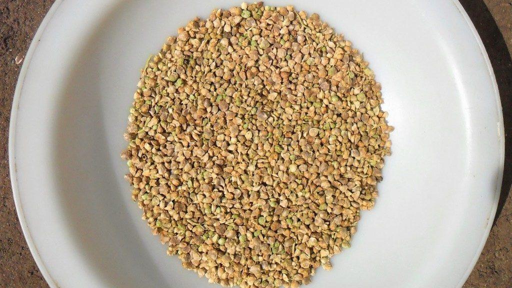 Сухие семена шпината в тарелке