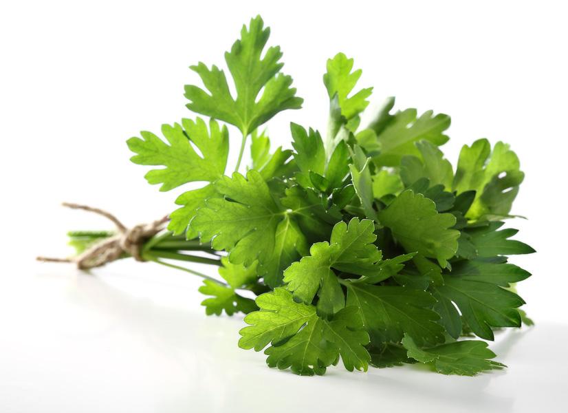 Пучок свежей зеленой петрушки