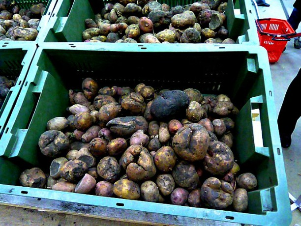 Последствия переизбытка влаги у картофеля