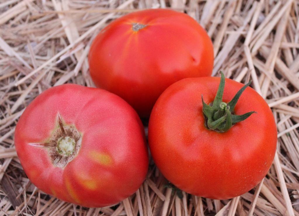 Плоды томата Титан