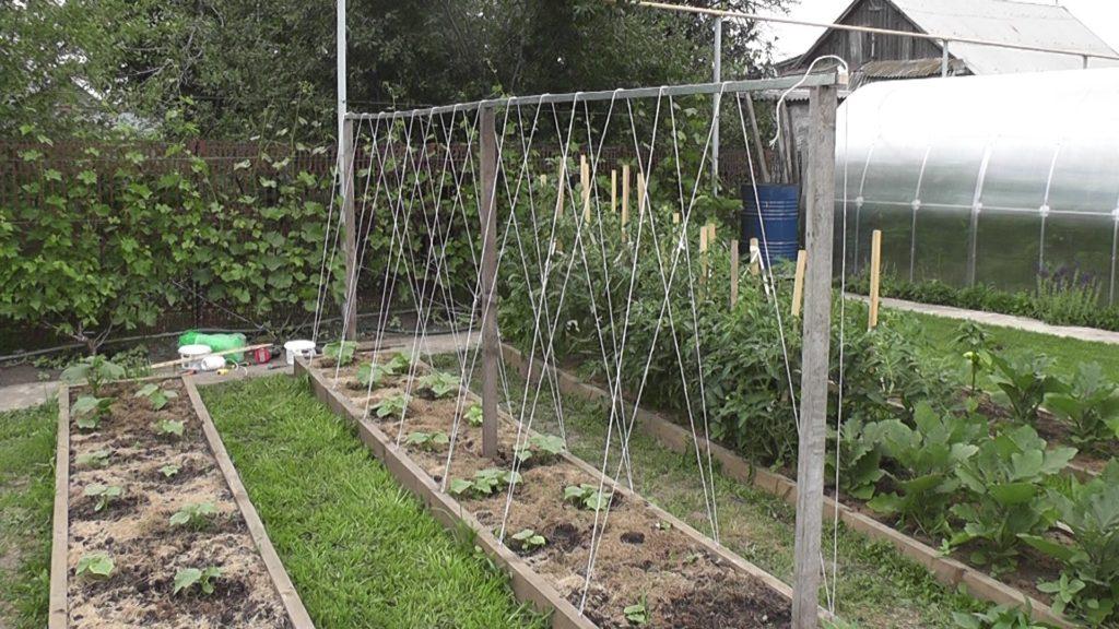 Шпалера для выращивания огурцов