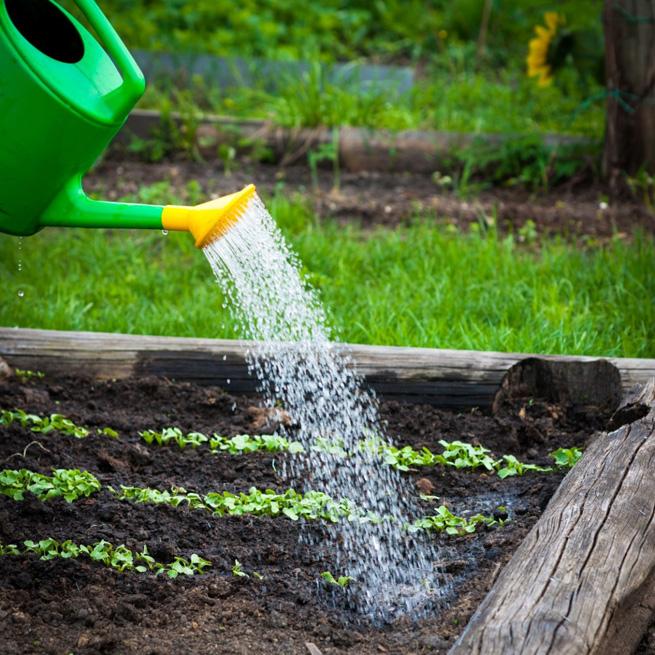Удобрение растений раствором селитры