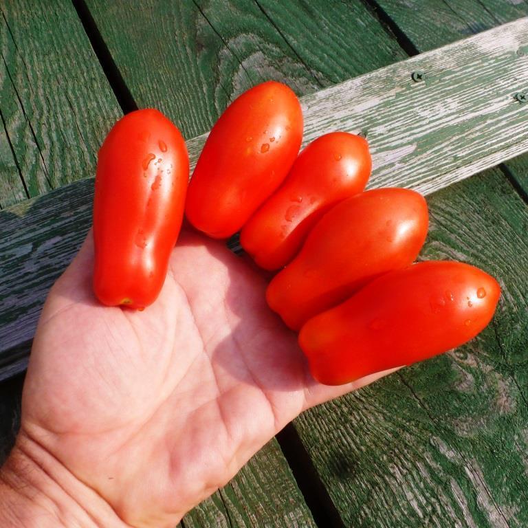 """""""Дамские пальчики"""" на руке"""