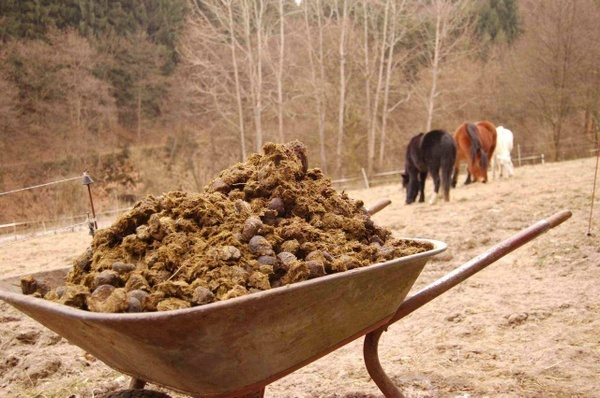 Конский навоз для удобрения почвы