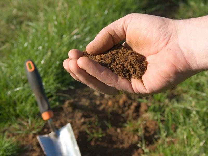 Горсть почвы в руке