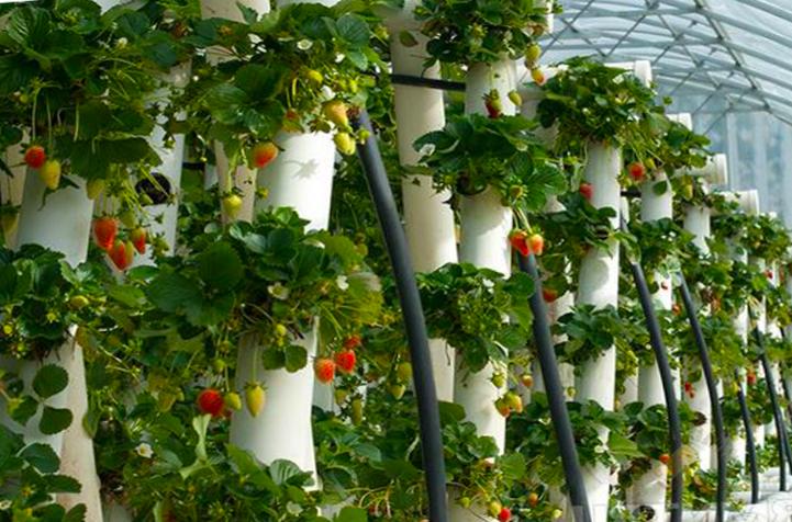 Выращивание вертикально в трубах ПВХ